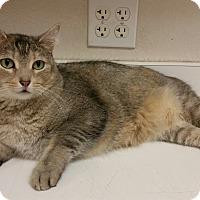Adopt A Pet :: Shyla - Phoenix, AZ