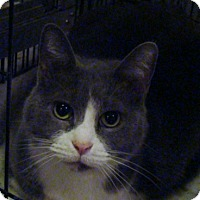 Adopt A Pet :: Feather - Muncie, IN