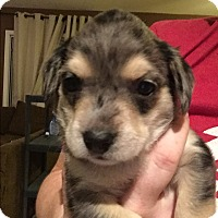 Adopt A Pet :: Carlisle - Henderson, NV