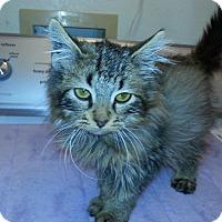 Adopt A Pet :: Monty - Gilbert, AZ