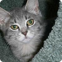 Adopt A Pet :: Ayla - Cleveland, OH