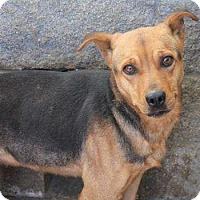 Adopt A Pet :: Kelsey - Sudbury, MA