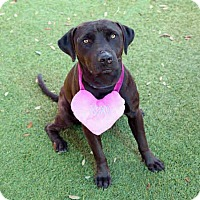 Adopt A Pet :: Troy - Windermere, FL