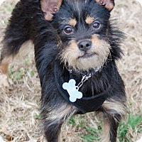 Adopt A Pet :: Alfalfa - Arlington, TN