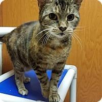 Adopt A Pet :: MISS PHANG - Tiffin, OH