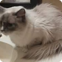 Adopt A Pet :: Blaze - Ennis, TX