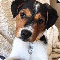Adopt A Pet :: Vp litter - Ramzi - Livonia, MI