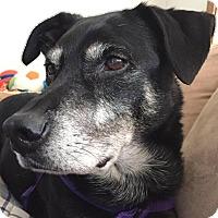 Adopt A Pet :: Jack the Beanstalk - Worcester, MA