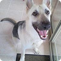 Adopt A Pet :: Sandy - Dripping Springs, TX