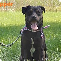 Adopt A Pet :: Trapper - Bucyrus, OH