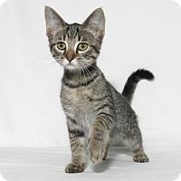 Adopt A Pet :: Ginger - Lufkin, TX