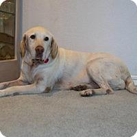 Adopt A Pet :: SKY - Clovis, CA