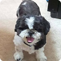 Adopt A Pet :: Buckwheat - Fairmont, WV