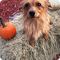 Adopt A Pet :: Tawny - Spartanburg, SC