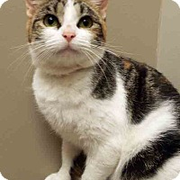 Adopt A Pet :: Astrid - Hinsdale, IL