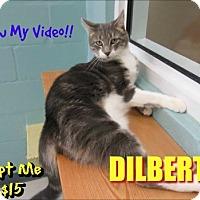 Adopt A Pet :: Dilbert - Sarasota, FL