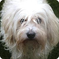 Adopt A Pet :: Winter - Woonsocket, RI