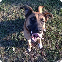 Adopt A Pet :: Rowan (fostered in Maine) - Greeneville, TN