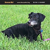 Adopt A Pet :: bongo - Homestead, FL