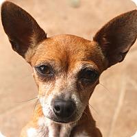 Adopt A Pet :: Mimi - need a little friend? - Norwalk, CT