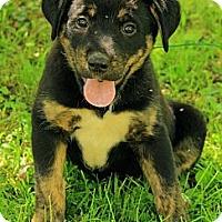 Adopt A Pet :: Ryann - Staunton, VA