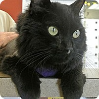 Adopt A Pet :: Ozzy - white settlment, TX