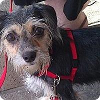 Adopt A Pet :: Camila - Miami, FL