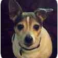 Adopt A Pet :: Peanut - Jacksonville, FL
