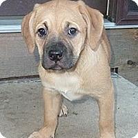 Adopt A Pet :: Punkin - Oak Creek, WI