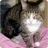 Adopt A Pet :: Mittens - Encinitas, CA