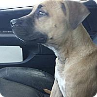 Adopt A Pet :: Aria - Perris, CA
