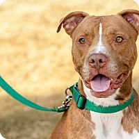 Adopt A Pet :: Buddy - Courtesy Post - Alpharetta, GA