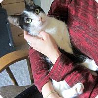 Adopt A Pet :: Loreli (Dog-like Lovebug) - Arlington, VA