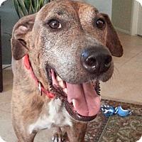 Adopt A Pet :: Pete - Mesa, AZ
