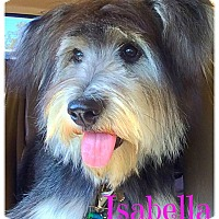 Adopt A Pet :: Isabella - Scottsdale, AZ