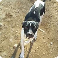 Adopt A Pet :: Jett-LOCAL - Lebanon, ME