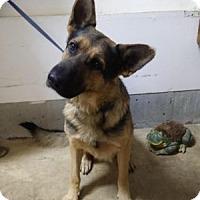 Adopt A Pet :: John - Louisville, KY