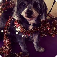 Adopt A Pet :: Maxine - Lodi, CA