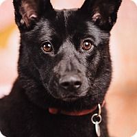 Adopt A Pet :: Faith - Portland, OR
