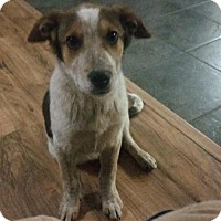 Adopt A Pet :: Memphis - Glendale, AZ