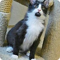 Adopt A Pet :: Jude - Davis, CA