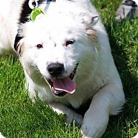Adopt A Pet :: Rescue Carmen - Batavia, NY