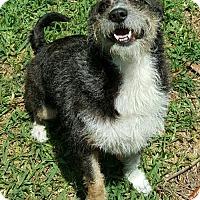 Adopt A Pet :: MOLLY - Fort Pierce, FL