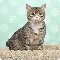 Adopt A Pet :: Booties - Chippewa Falls, WI