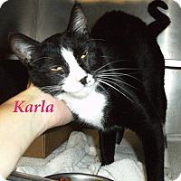 Adopt A Pet :: Karla - El Cajon, CA