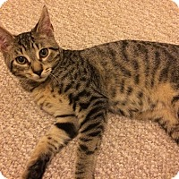 Adopt A Pet :: Leonardo - East Brunswick, NJ