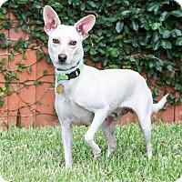 Adopt A Pet :: Lori Loughlin - Jersey City, NJ