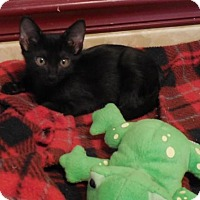 Adopt A Pet :: Jordanna - San Antonio, TX