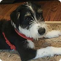 Adopt A Pet :: Mac - North Richland Hills, TX