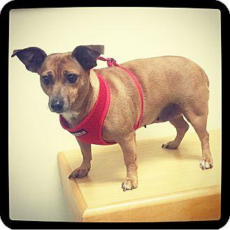 Dachshund Mix Dog for adoption in Grand Bay, Alabama - Pixie